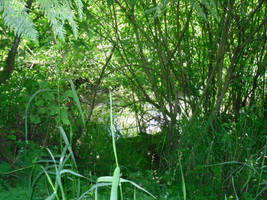 Bushes along the Stream by GeneralDurandal