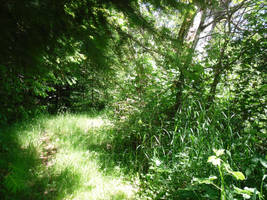 The trail goes on by GeneralDurandal