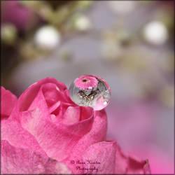 Echoes of pink by AnnaKirsten