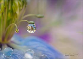Clarity by AnnaKirsten