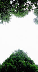 Tree Canopy by todaywiththeCJB