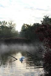Swan lake by eperlekvar