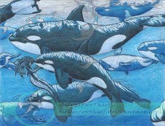 Orca Buddies by SilverFoxThief