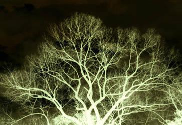 skeleton tree by MJwesner
