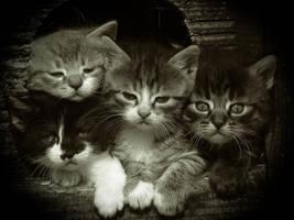 Family by ruuca