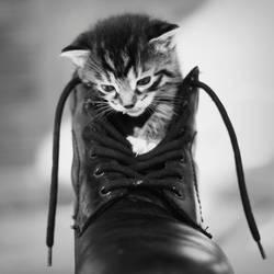 Kitty by ruuca