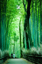Tranquility in a Bamboo Forest by geolio
