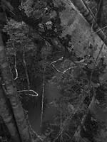 The Jungle Marshlands 1 by Muirava