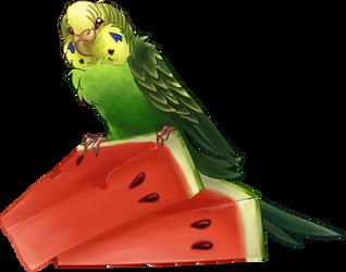 Budgiemelon by gabfury