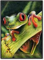 Frogface ATC by pbird12