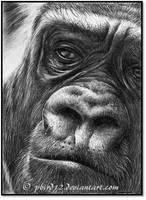 Primate ATC by pbird12
