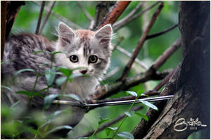 Kitten in a sieve by brijome