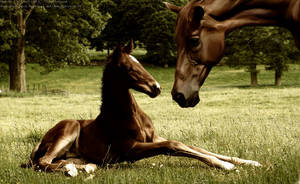 .:A Mother's Love:. by horsecrazycool