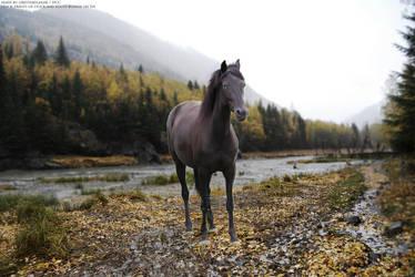 .:Just Desert Me:. by horsecrazycool