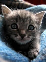 kaju the cat by Seaborne