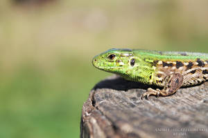 Green Young Lizard by Legat1992