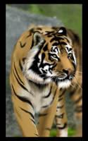 -TIGER- by gabo-the-baka