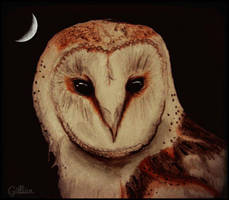 Barn Owl by gilly15