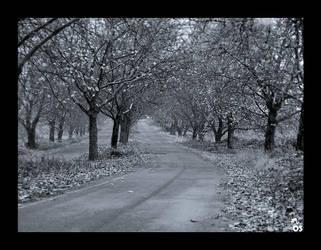 Hidden Road by flippersmac69