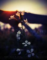The Last Light by KovoWolf