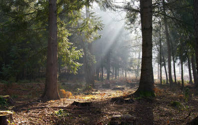 Forest Of Dean 1 by angel1592Stock