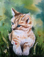 Cat by shirly90
