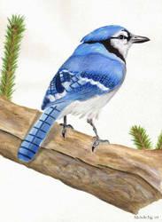 Blue Birdy by Lunatiger