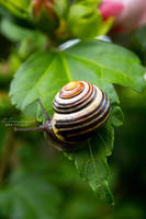 A snails pace by Kaedos