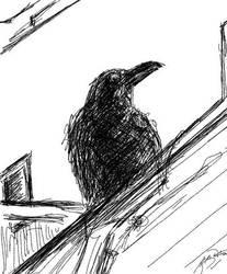 Big Ol' Crow by divinewyvern