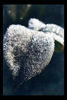 Frozen Leaf by dakotapearl