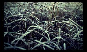 Frozen Field by dakotapearl