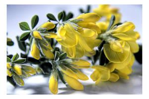 Spring Telltail by dakotapearl