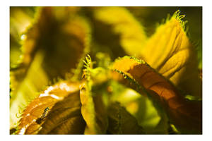 Under Yellow by dakotapearl
