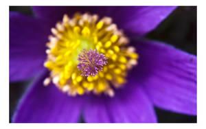 Finding Purple by dakotapearl