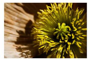 Floriade - A closer look I by dakotapearl
