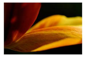 Floriade - A closer look II by dakotapearl