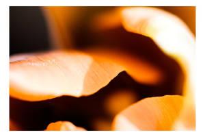 Floriade - A closer look III by dakotapearl