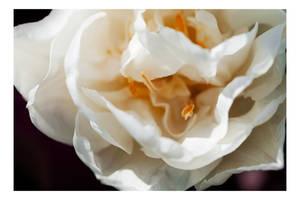 Floriade - A closer look IV by dakotapearl