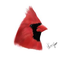 Cardinal Study by CherriePieArt