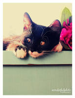 my little cat part 1 by wonderfulphoto