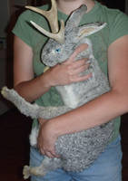 Silver Doe (SOLD) by Tricksters-Taxidermy