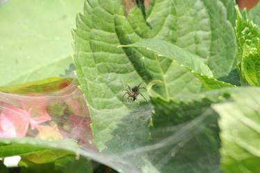 Spider 2 by GCsabai