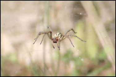 Spider 3 by GCsabai