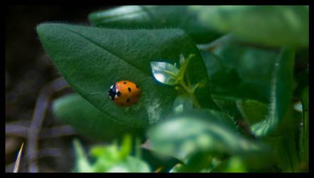 Ladybird by GCsabai