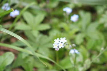 Flower 2 by GCsabai