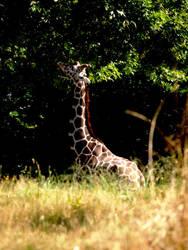 Zoo Trip Giraffe by the-astronaut
