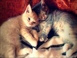 sleep mu friend by shkupyshkapymouz