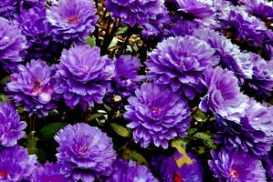 So Violet by Finnyanne