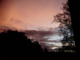 Morning glory by Finnyanne