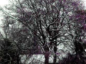 Winter impression by Finnyanne
